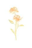 Bouquet Blush VII