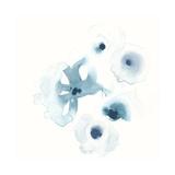 Protea Blue IV
