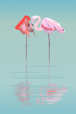 Pair of Flamingos in the Pond