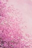 Pink On Pink II