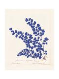 Botanical Fern III Blue