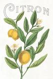 Classic Citrus V v2