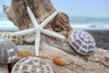 Crescent Beach Shells 7
