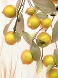 Lemons #1