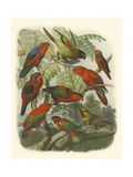 Red Cassel Birds II