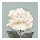 One Tan Rose