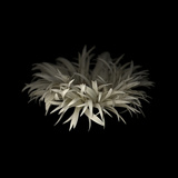 Darkness G5: Gerbera Daisy