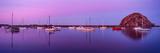 Boats moored at a harbor, Morro Bay Harbour, Morro Bay, California, USA