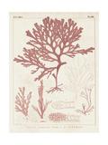 Antique Coral Seaweed II