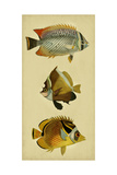Trio of Tropical Fish II