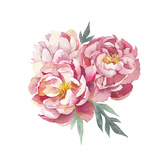 Watercolor Peonies Bouquet