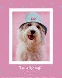 I'm a Spring