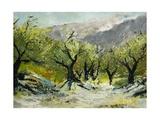 Olivetrees