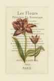 Le Fleurs Botanique II
