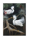 Snowy Egrets Display their Courtship Plumage in a Mangrove Swamp