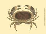 Antique Crab IV