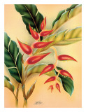 Heliconia, Hawaiian Tropical Flower c.1940s