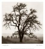 Country Oak Tree