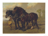 Two Plough Horses: Clydesdale Stallion and Mare