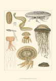 Underwater Oddities II