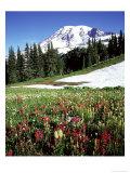 Alpine Meadow & Mount Rainier, Mount Rainier National Park, USA