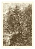 Sepia Larch Tree