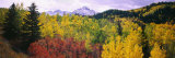 Trees on a Landscape, San Juan Mountains, Colorado, USA