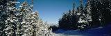 Treelined Ski Track, Winter Park Resort, Colorado, USA