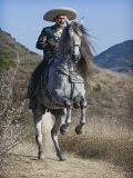 Horseman in Traditional Dress Riding Grey Andalusian Stallion, Ojai, California, USA