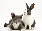 Black-And-White Dutch Rabbit with Oriental Type Cat
