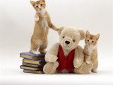 Domestic Cat, Two Red Kittens with Cream Teddy Bear in Red Waistcoat