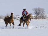 Cowboy Riding Red Dun Quarter Horse Gelding Through Snow, Bethoud, Colorado, USA