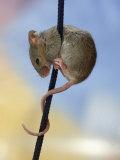 Domestic Mouse up Plant Stem
