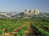 Vineyards of the Terra Alta, Near Tarragona, Catalonia, Spain