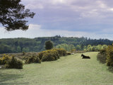 Bradley View, New Forest, Hampshire, England, United Kingdom