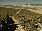 Vineyards Near Jerez, Cadiz, Andalucia, Spain