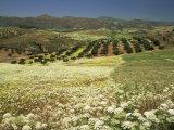 Landscape Near Velez Malaga, Andalucia, Spain