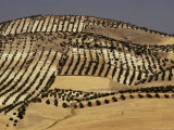 Landscape Near Jaen, Andalucia (Andalusia), Spain