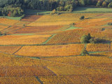 Beaujolais Vineyards Near Beuajeu, Rhone Alpes, France