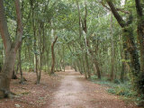 Path Through the Forest in Summer, Avon, England, United Kingdom