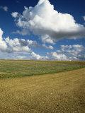 Landscape Near Chablis, Burgundy (Bourgogne), France