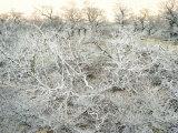 Dead Wood, El Chalten, Patagonia, Argentina, South America
