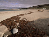Seaweed on Beach, Mellon Udrigle, Wester Ross, Highland Region, Scotland, United Kingdom