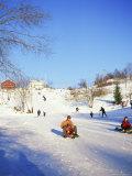 Sledging for Fun, Near Oslo, Norway, Scandinavia