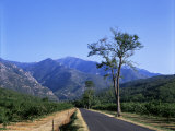 Mount Canigou, Pyrenees-Orientale, Languedoc Roussillon, France