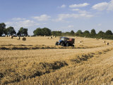 Tractor Harvesting Near Chipping Campden, Along the Cotswolds Way Footpath, the Cotswolds, England