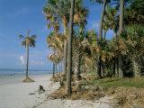 Sub-Tropical Forest and Coastline, Hunting Island State Park, South Carolina, USA