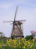 Windmill, Kinderdijk, Near Rotterdam, Holland