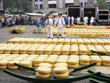 Cheese Market, Alkmaar, Holland
