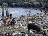 Children and Pigs Foraging on Rubbish Strewn Beach, Dominican Republic, Central America